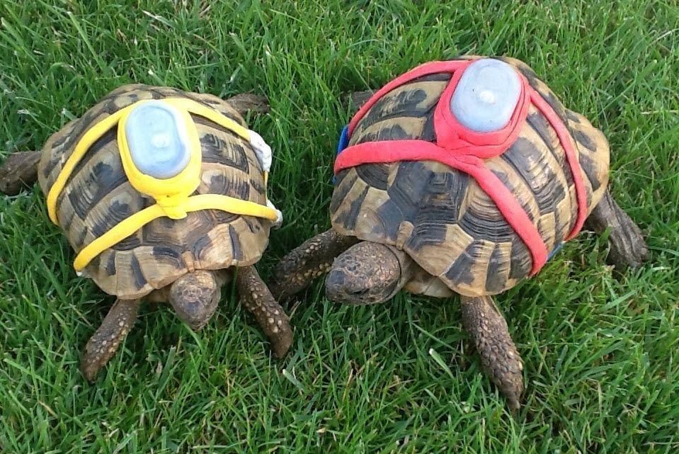 Diy sugru tortoise tracker a great way to keep track of your diy sugru tortoise tracker a great way to keep track of your tortoises especially solutioingenieria Choice Image