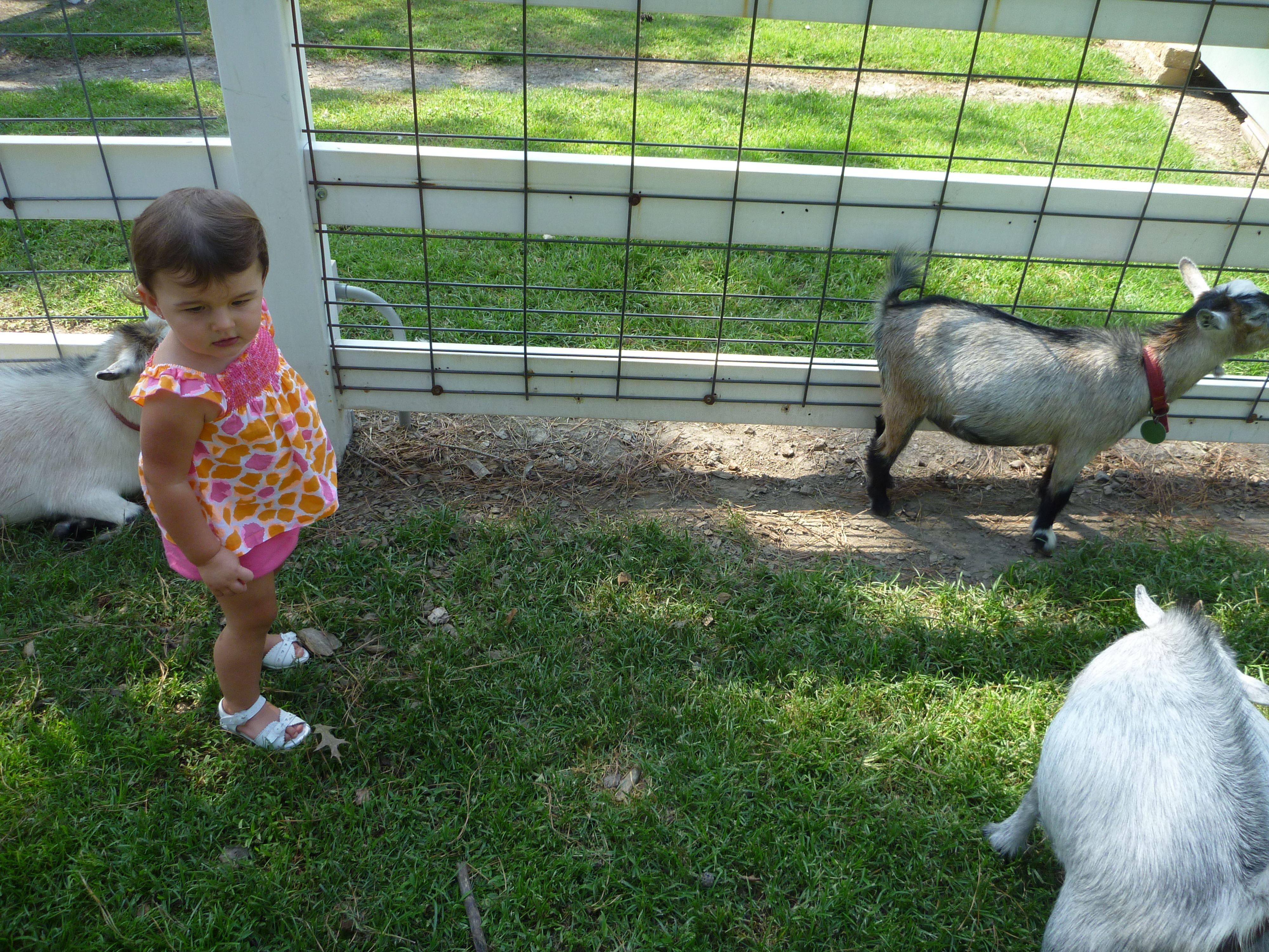 Hunt Club Farm Petting Zoo Virginia Beach Va