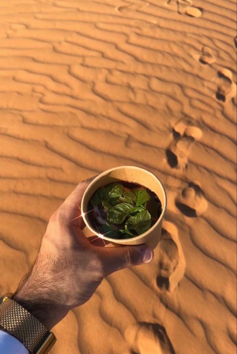 اجواء الشتاء و الكشتات How To Dry Basil Herbs Basil
