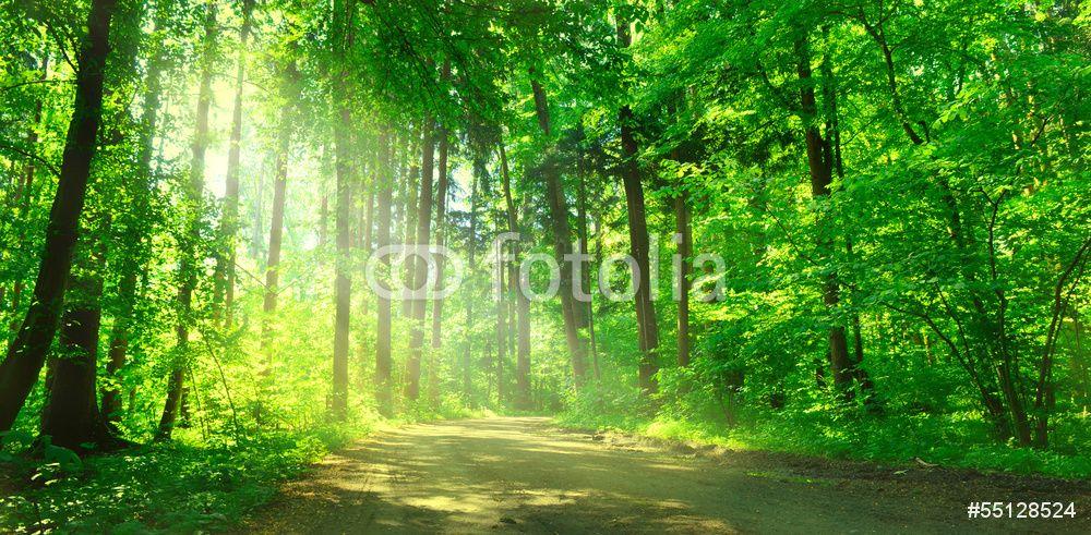Wandtapete Waldweg
