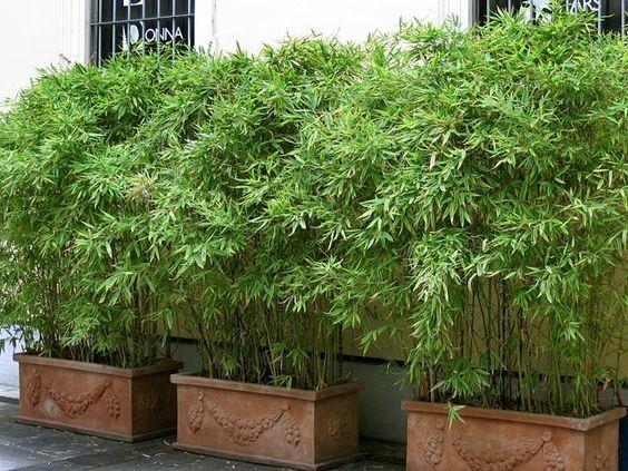 bambus im kübel kann eine terrasse im garten oder einen balkon mit, Terrassen ideen