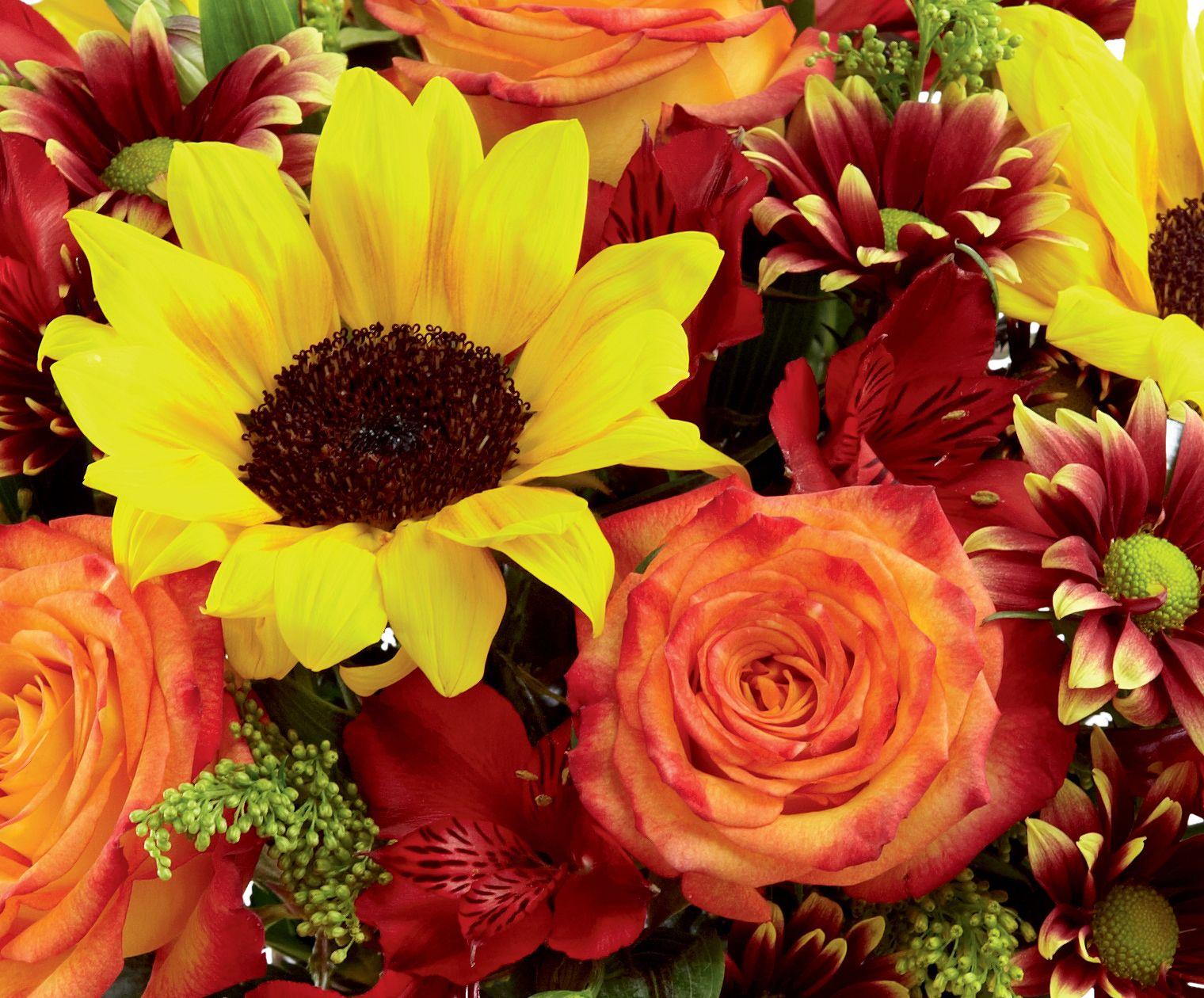 Country Sunflower Mason Jar at Send Flowers Orange rose