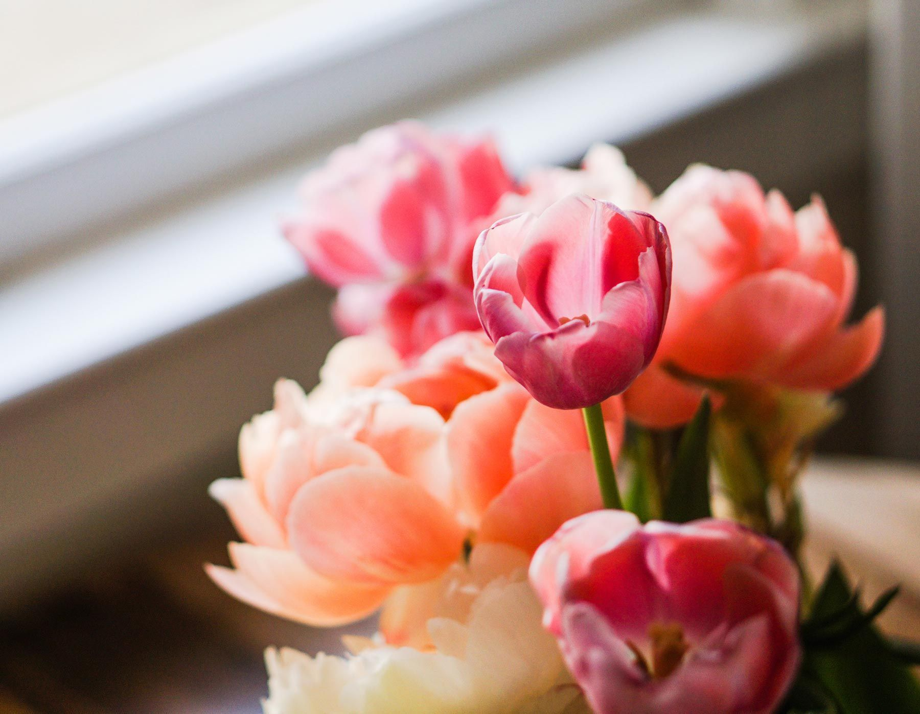 The most beautiful flower photography rosey pinterest flower the most beautiful flower photography izmirmasajfo