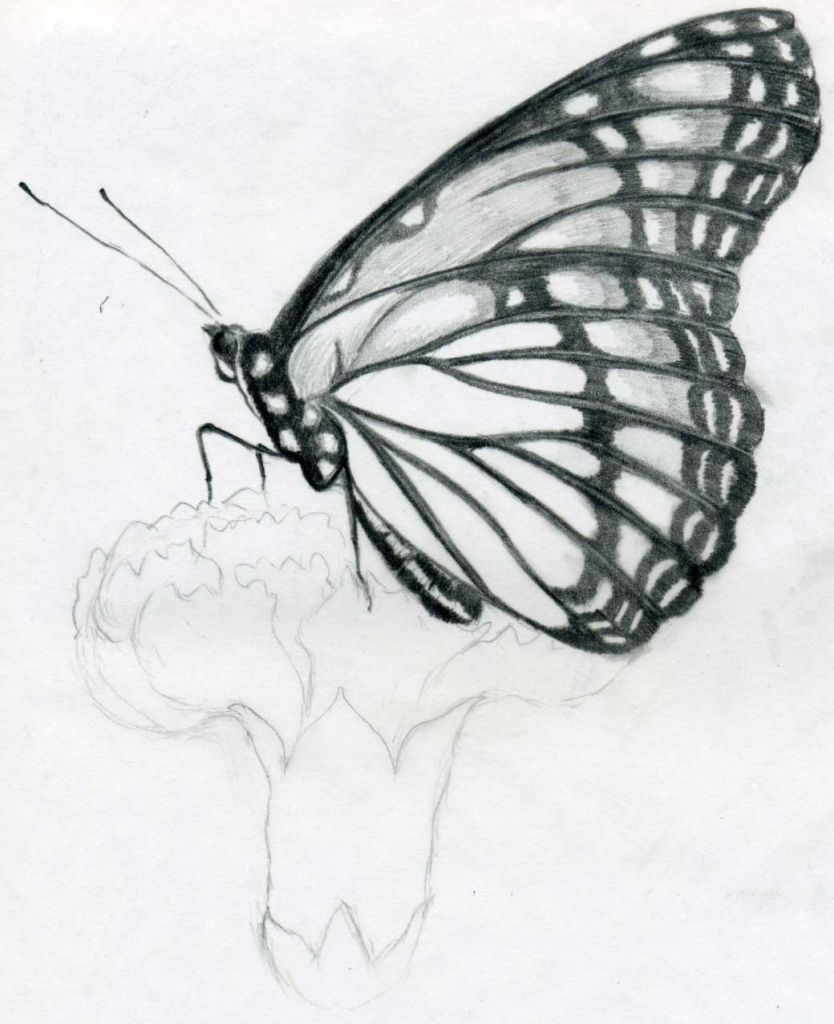 Creative Drawing Ideas For Beginners Google Search Pencil Drawings Tumblr Music Drawings Art Drawings Simple