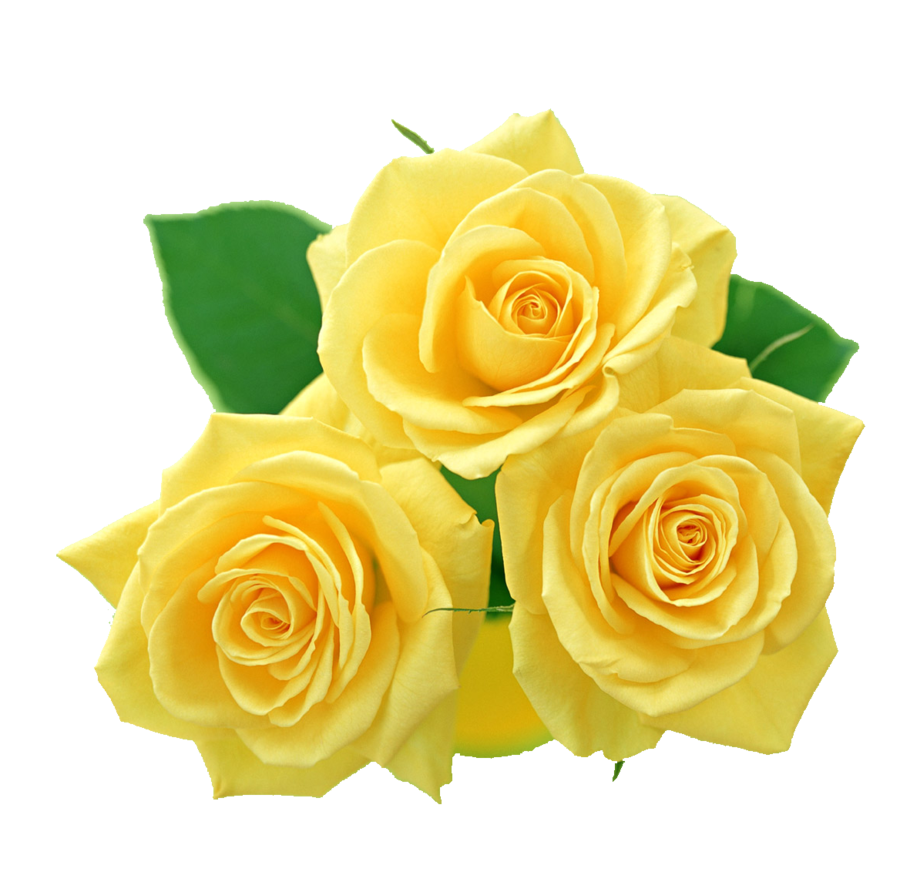 Wallpaper Of Yellow Rose: Yellow Roses PNG By Melissa-tm