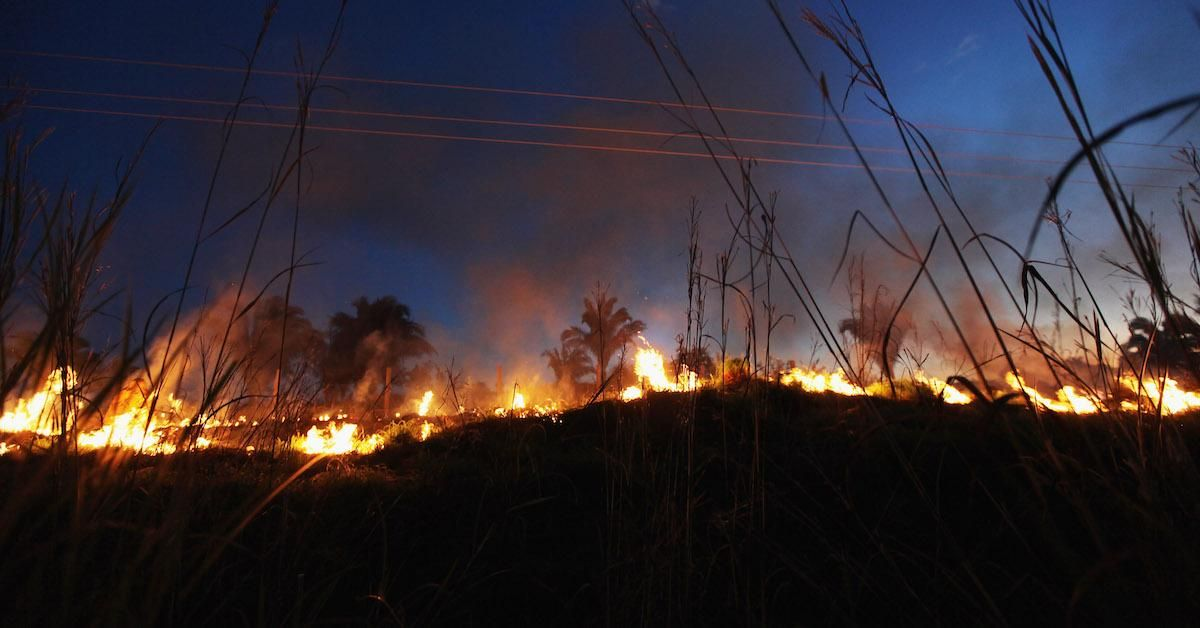 The Record Breaking Amazon Rainforest Fires Could Be Detrimental