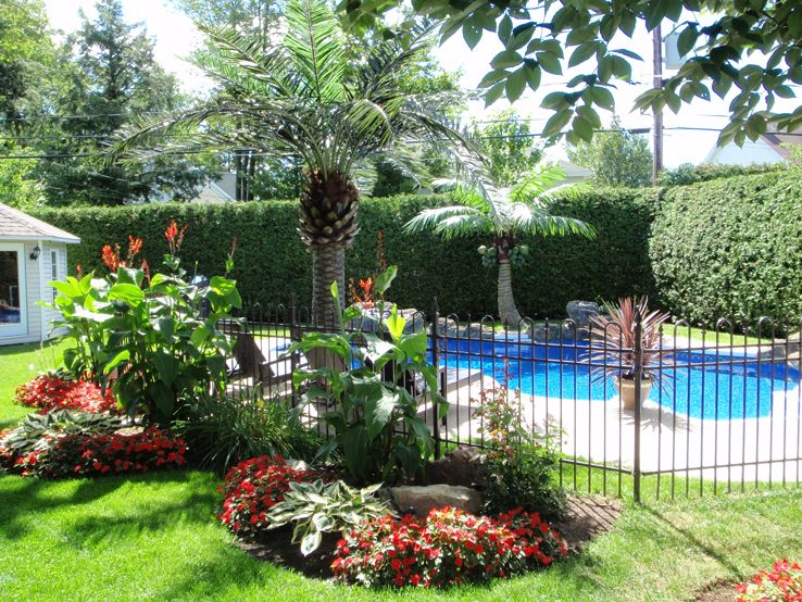 The 25+ best Palm trees landscaping ideas on Pinterest ...