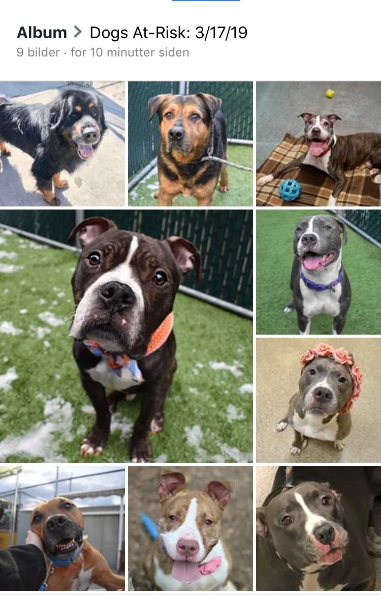 9 PRECIOUS INNOCENT DOGS LISTED TO DIE 3/19/19 AT THE HIGH