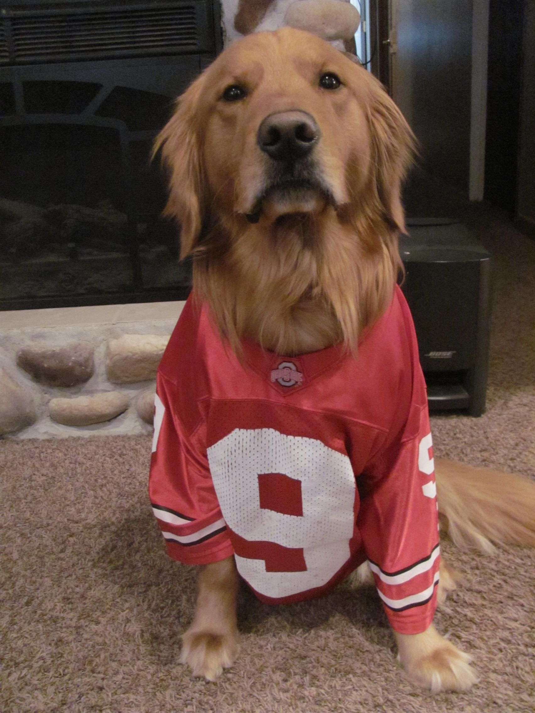 Ohio State Buckeye Dog Jersey They Better Have A Cat One Too
