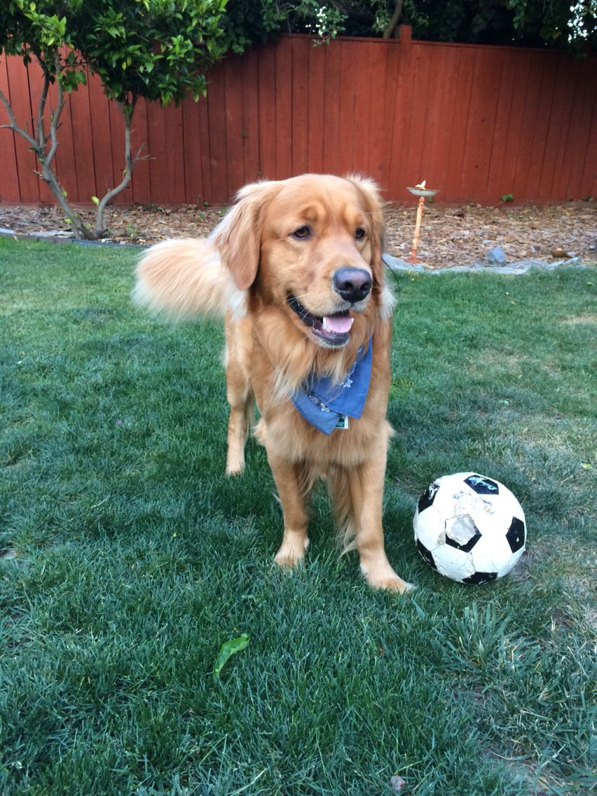 Score Family Friendly Dogs Best Dogs For Families Cute Animals