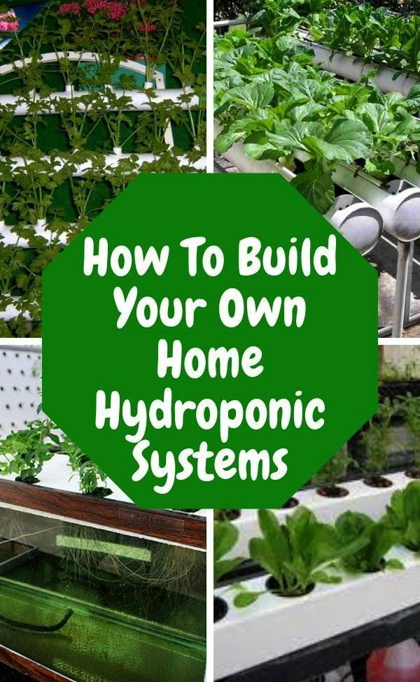 Hydroponics Are you excited about what youve read so far about hydroponic gardening Ready to start you own hydroponic garden and put theory into practice Lear how to buil...