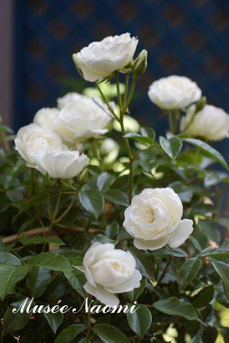 お花のサロン Musee Naomi Diary