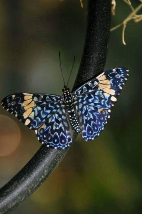 Pretty blue butterfly