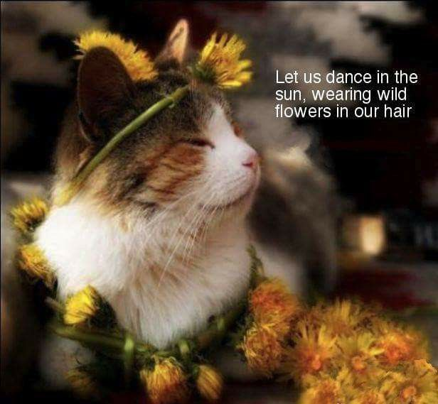 Let us dance in the sun, wearing flowers in our hair.