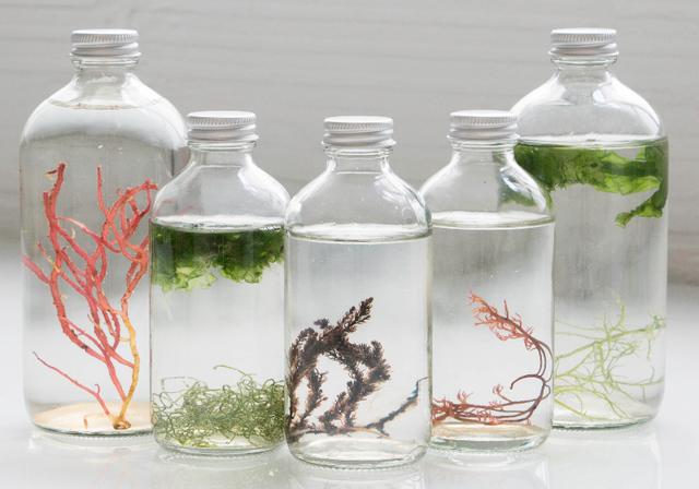 Fancy - Wave Break living art from Cultured Algae