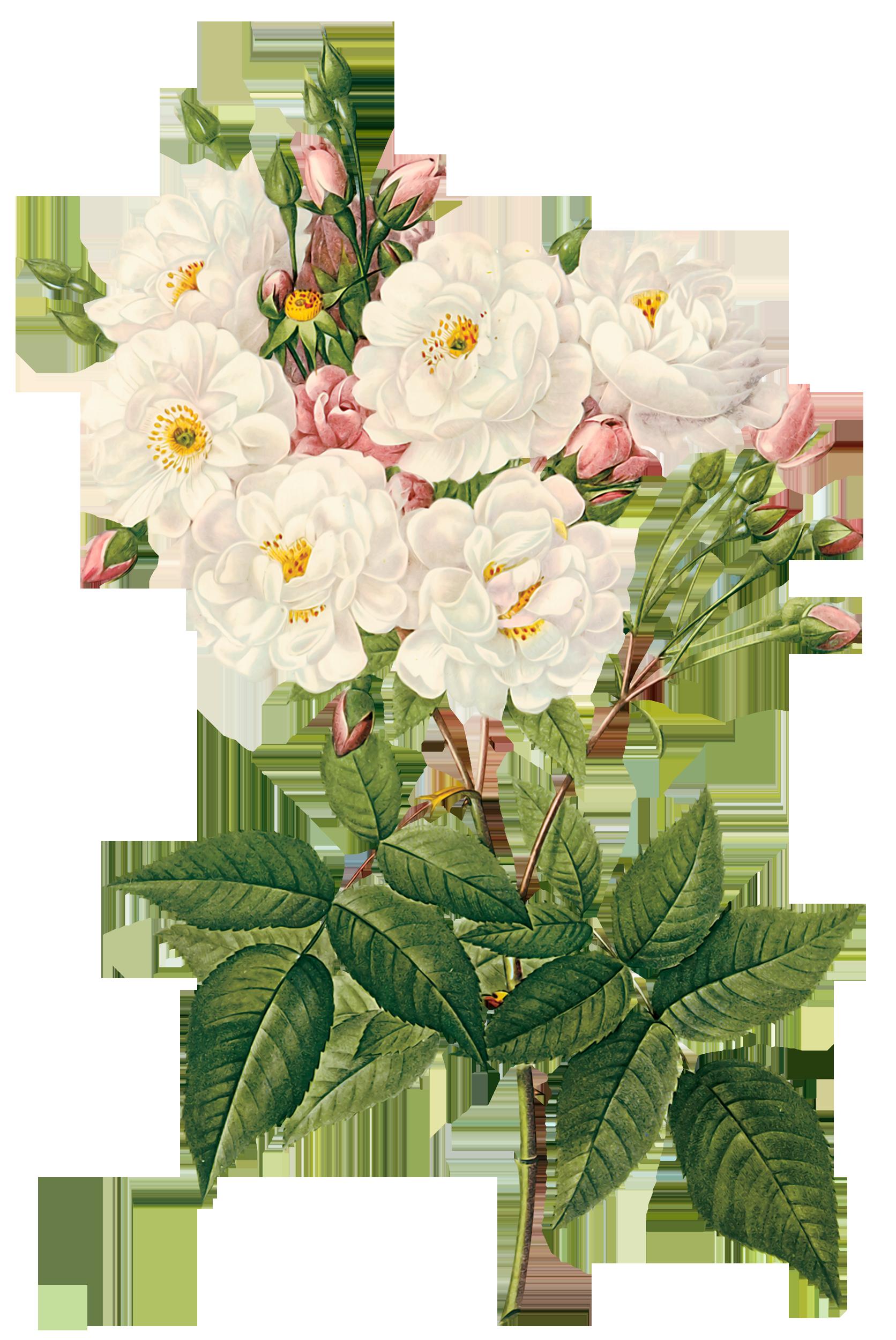 постер цветы на белом фоне этого, она