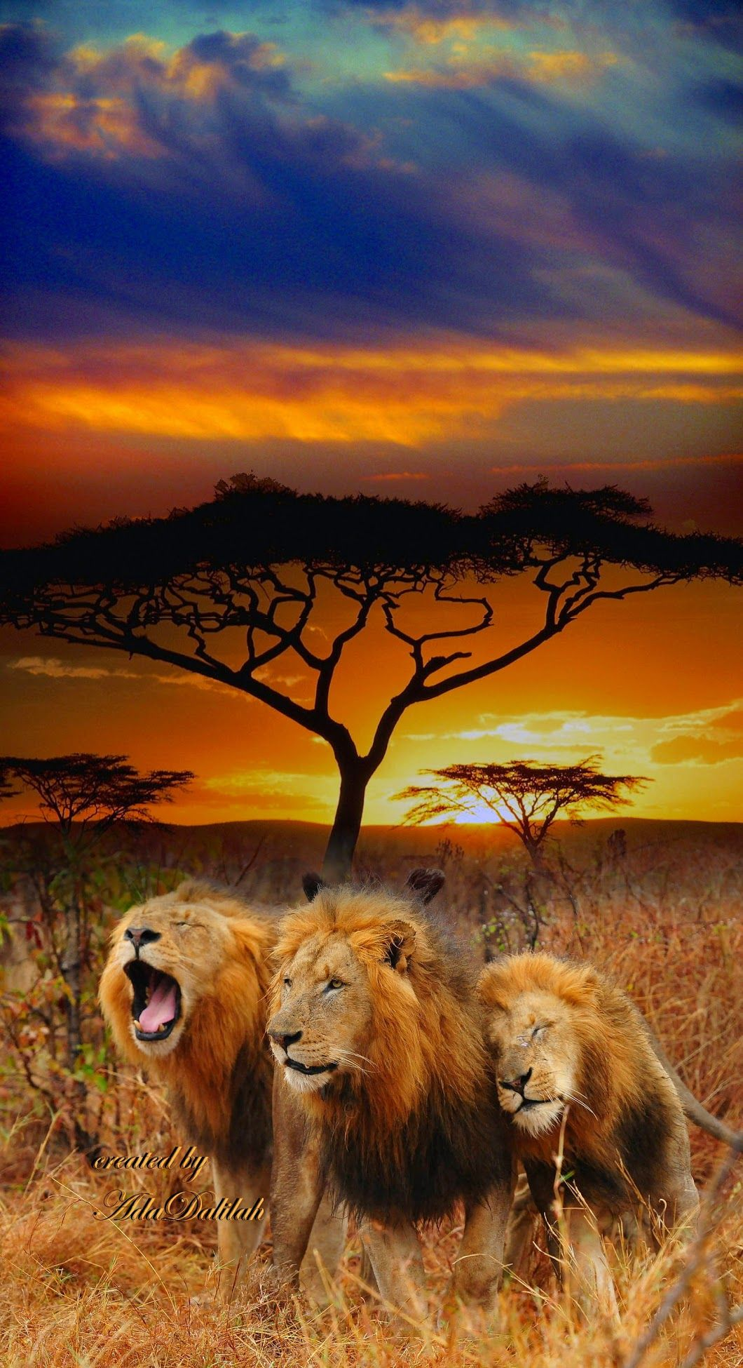 Long day of stalking zebras, antelopes and cute lion chicks. | Happy Animals! | Animals beautiful, Lions photos, Animals