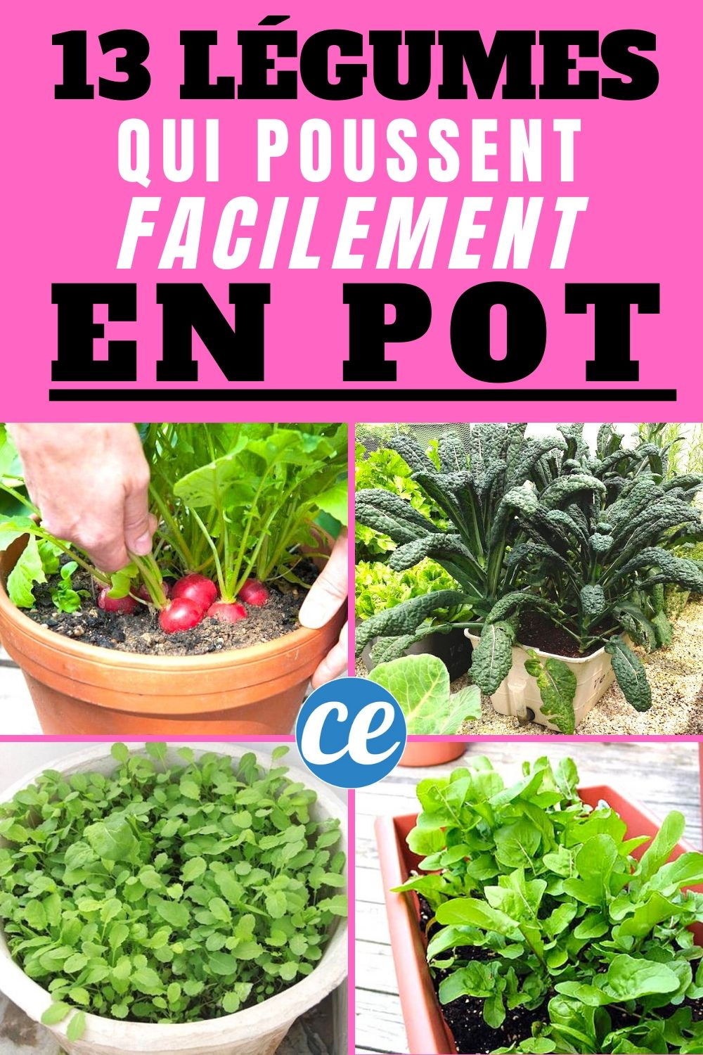 Les 13 Légumes Les Plus Faciles (et Rapides) à Faire