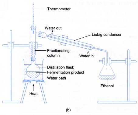 Preparation Ethanol Laboratory Experiment 2 Fermentation Products Calculus Chemical Reactions