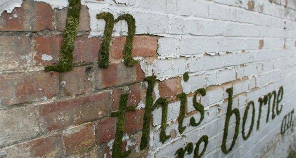DIY: Mos graffiti | Tuinieren met Bakker