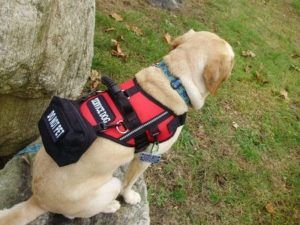 Selecting The Right Service Dog Vest Service Dog Certifications