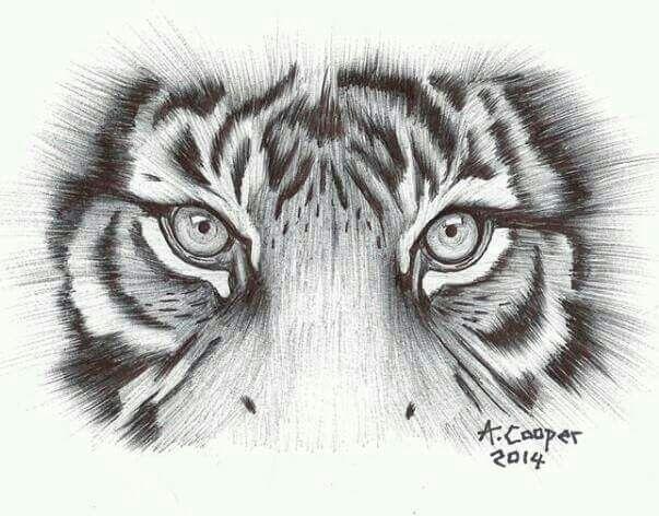 tiger eyes 2014  olhos de tigre tatuagem tatuagem de