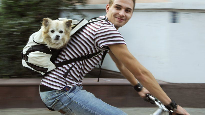Radfahren Mit Hund Mit Waldi Auf Fahrradtour Hunde Radfahren Fahrrad