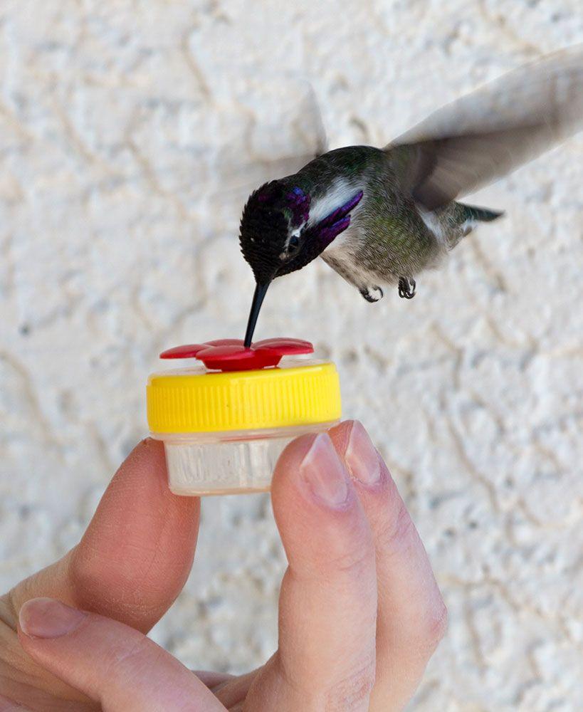 Set of 2 Nectar DOTS™ Handheld Hummingbird Feeders