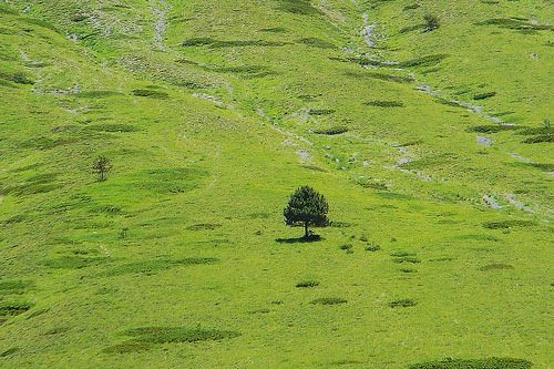Italy,Umbria,Norcia - tree2 by Gianni Dedl Bufalo  (CC BY-NC-SA 2.0) इटली  意大利 Italujo イタリア Италия איטאליע إيطاليا