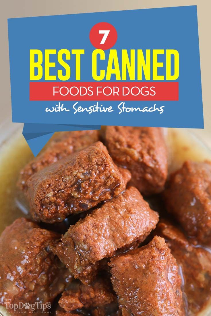 wet or dry dog food for sensitive stomach