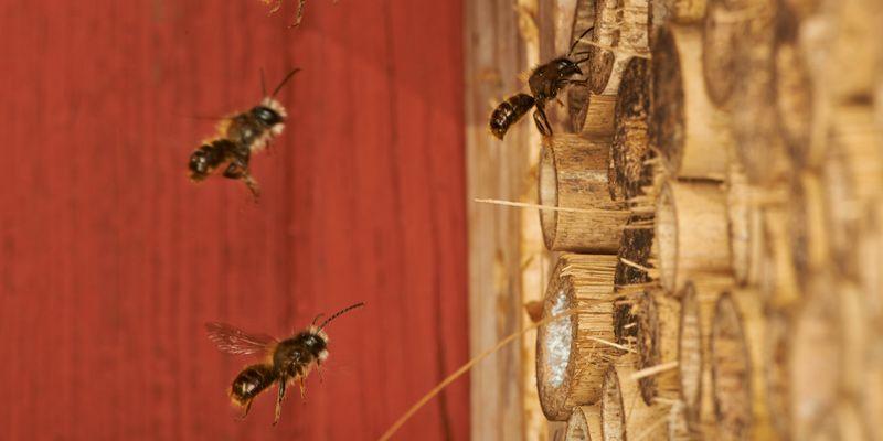 Wildbienen Stark Gefahrdet Wildbienen Bienen Bedrohte Tiere