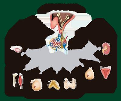 Sistema porta pituitaria | luisa | Pinterest
