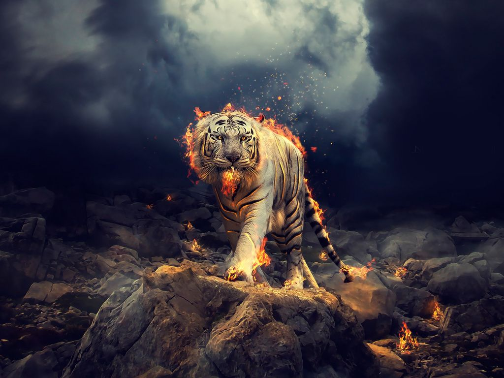 Desktop Wallpaper Angry Raging White Tiger Hd Image Picture Backgrounds 00b155 Tiger Wallpaper Tiger White Tiger