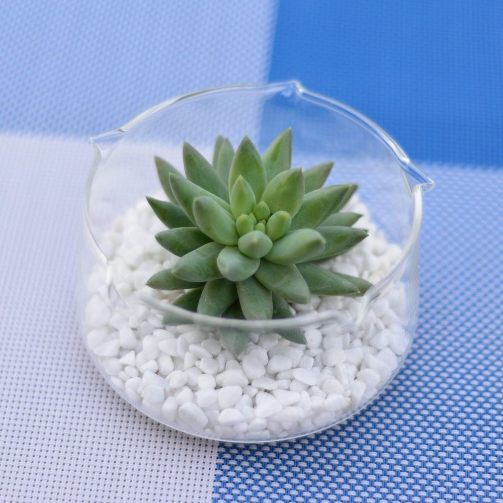 Round Glass Planter Container Clear Pot Air Plant Succulent