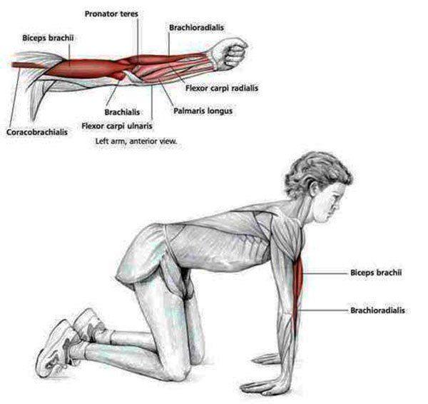 alongamento-1   Stretch   Pinterest   Estiramiento, Anatomía y Músculos