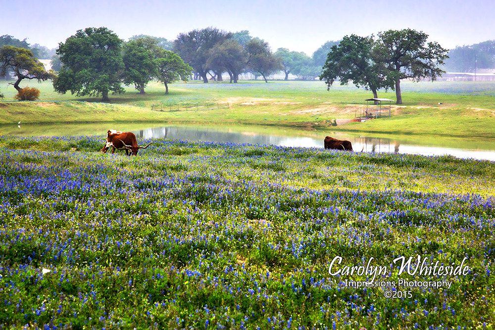 Texas Hill Country Landscape Photos Texas Hill Country Photography Country Photography Country Landscaping Texas Hill Country