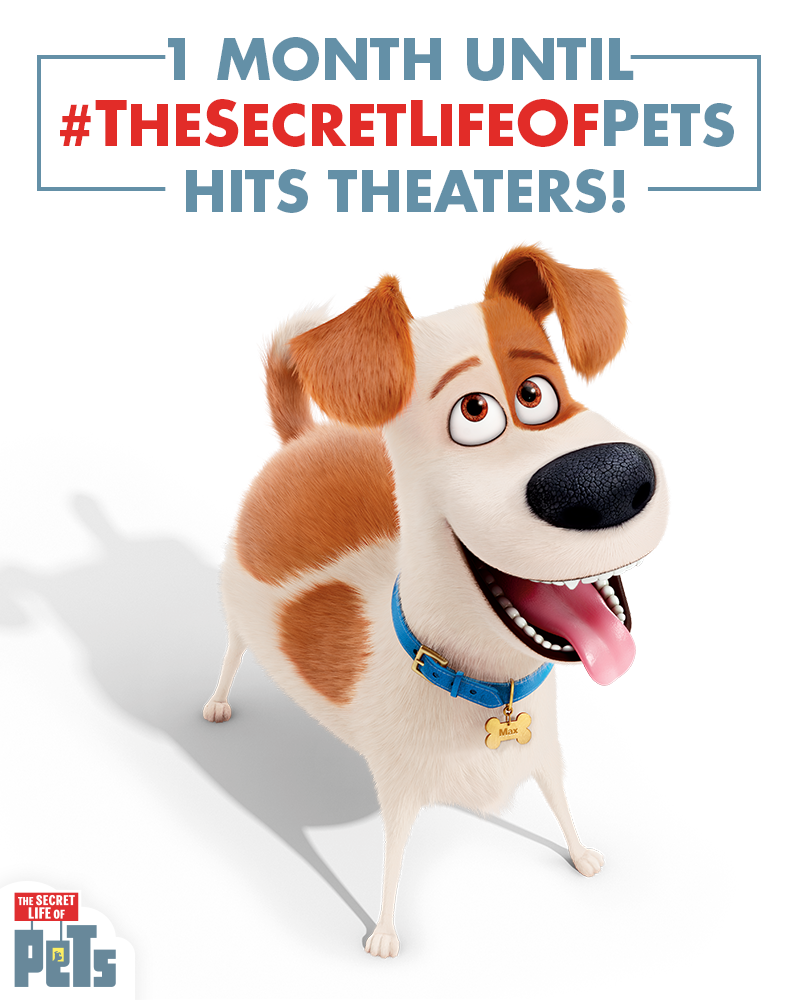 Only 1 Month Left Until The Secret Life Of Pets Hits Theaters On