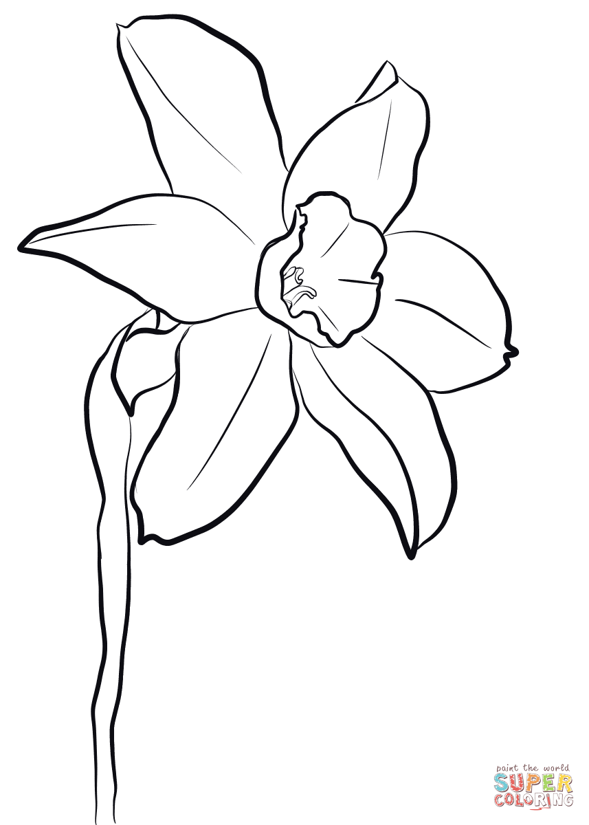 Daffodil Coloring Page Free Printable Coloring Pages Coloring Pages Free Printable Coloring Pages Free Floral Printables [ 1200 x 857 Pixel ]