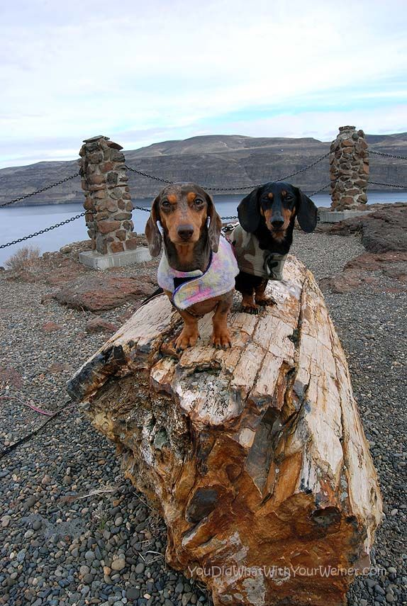 Our Weekend Desert Adventure In Moses Lake Weenie Dogs