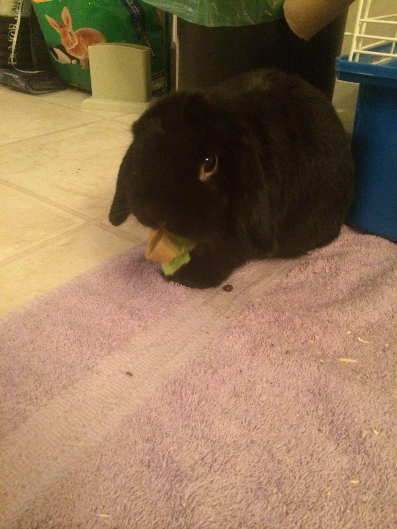 Huckleberry Eating Kiwi Bunny Rabbit Bunny Rabbit