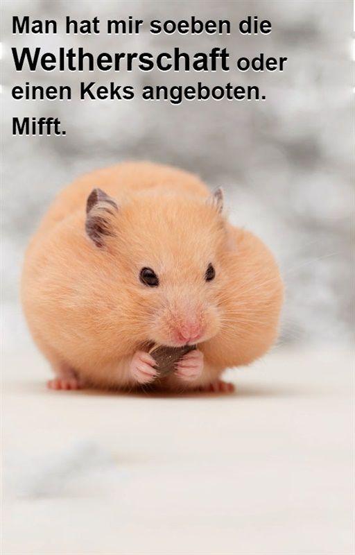 Hamster Bilder Lustig