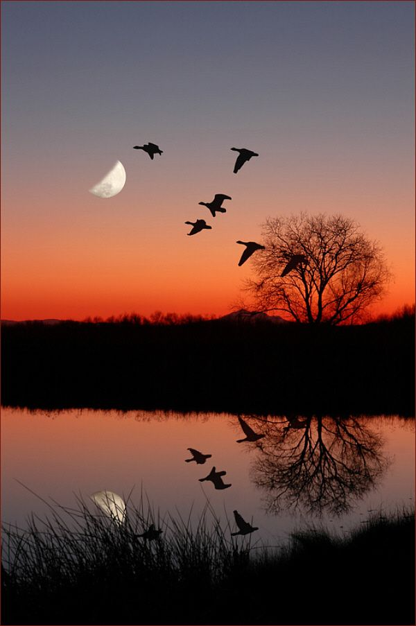 Image result for geese on a moonlit lake