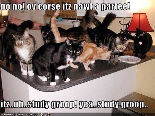 Image result for group of cats studying meme