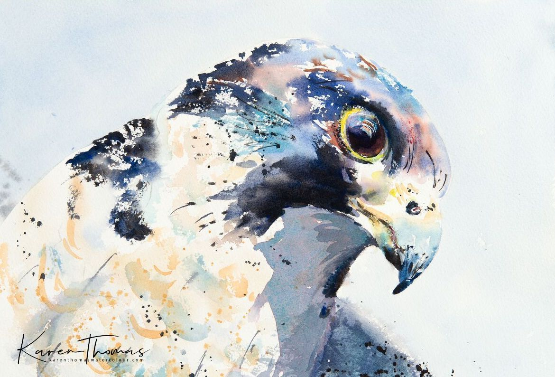 Peregrine Dreams Painting Art Watercolor Bird