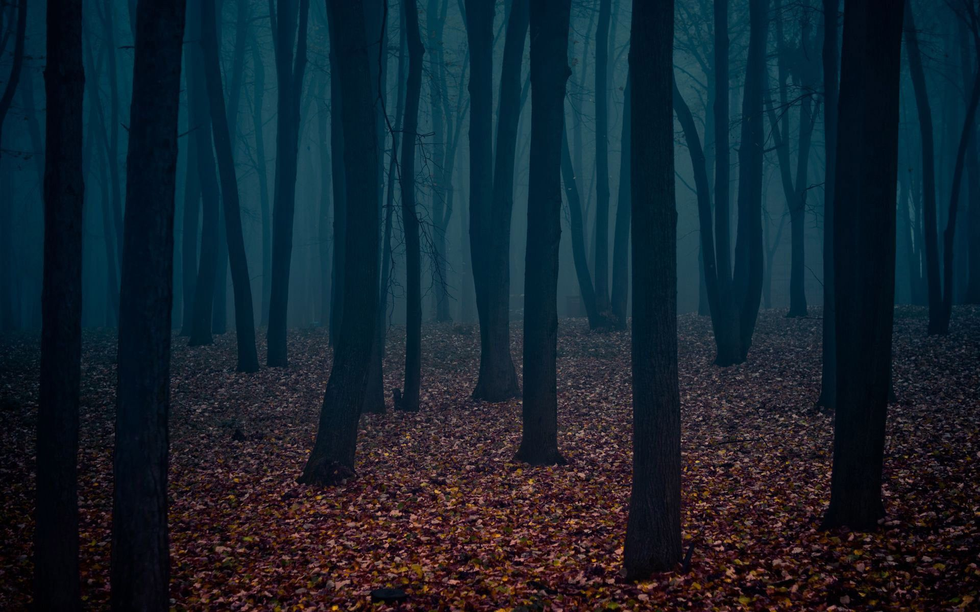 Dark Forest Wallpaper High Quality Resolution Free Download