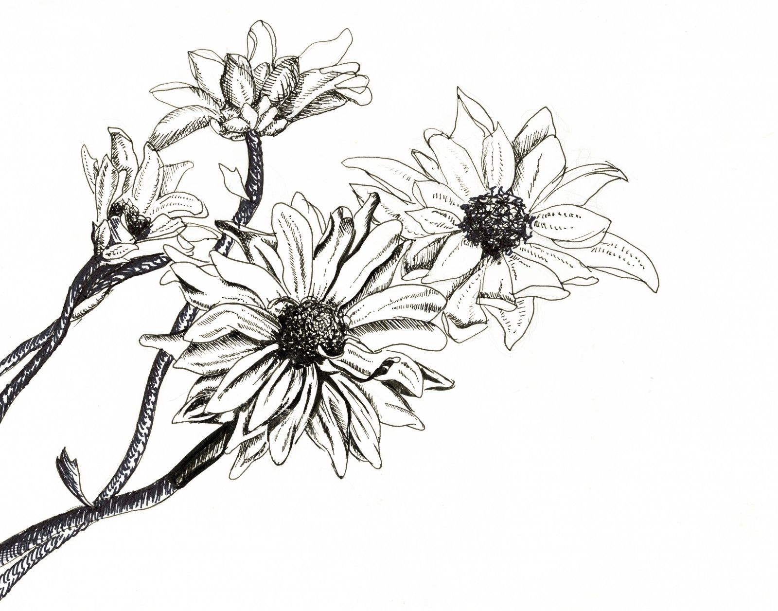Flowers pen ink drawing flowers pinterest for Ink drawings easy