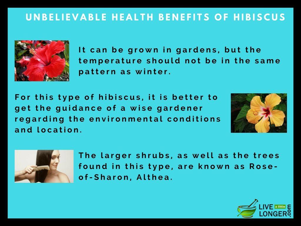 Health Benefits Of Hibiscus Tea And Flower Are Plenty Hibiscus