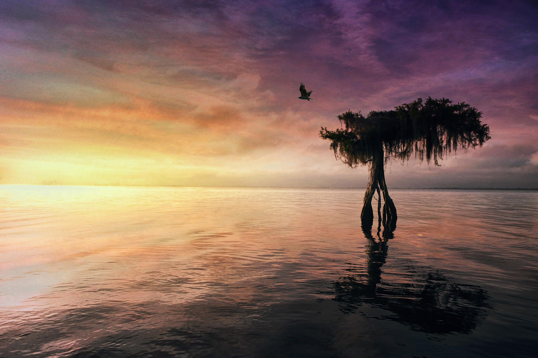 Sunrise Cypress by Brian Kaplan
