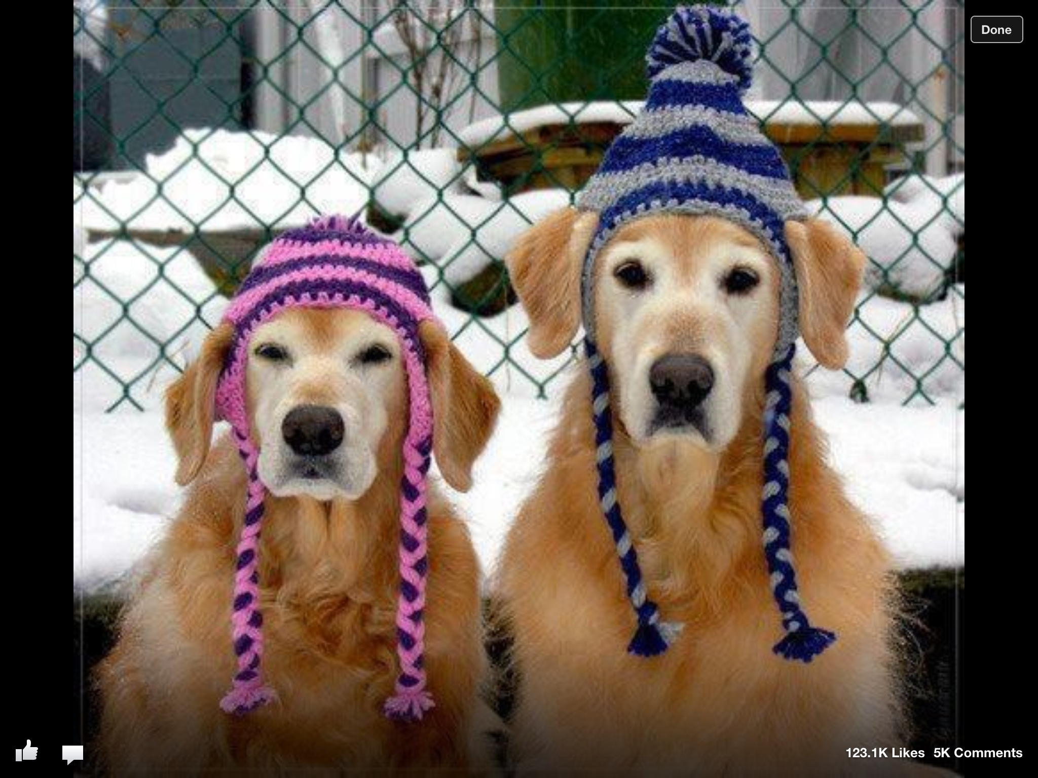 Pin by Liz Norris on Critters! Crochet dog hat, Dog hat