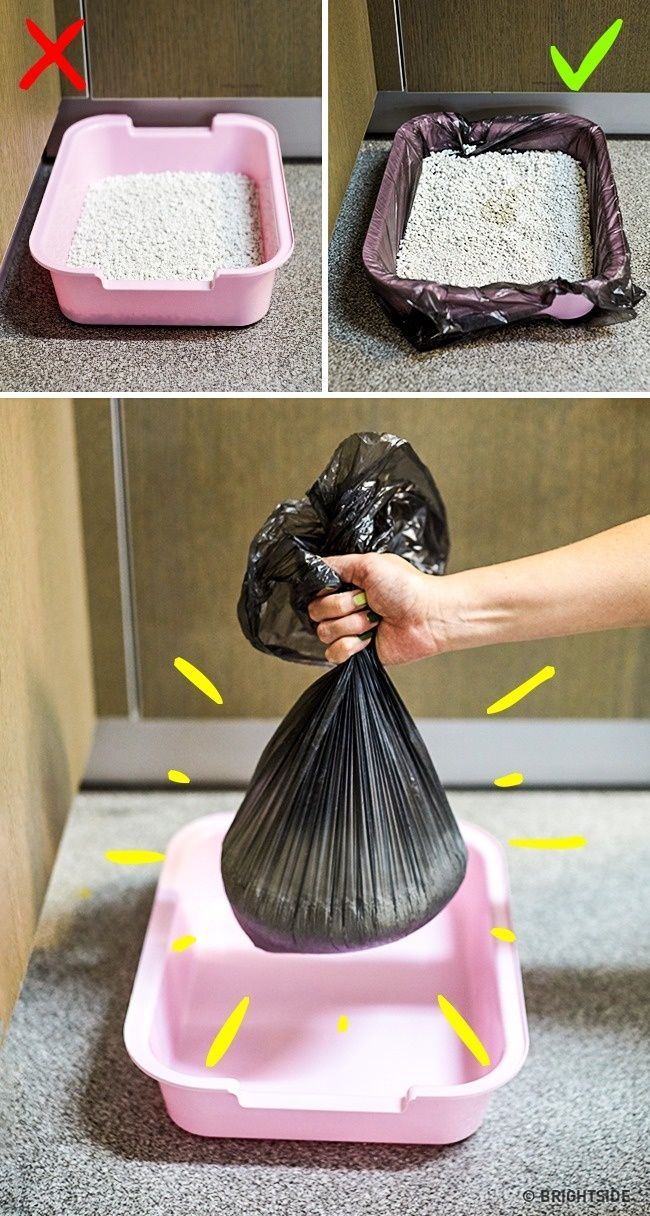 10 Genius Tricks The Internet Doesn T Know About Yet Cat Diy Cat Litter Box Cat Litter